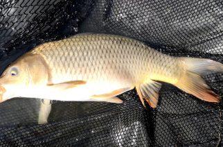 Łowienie z powierzchni cz. II